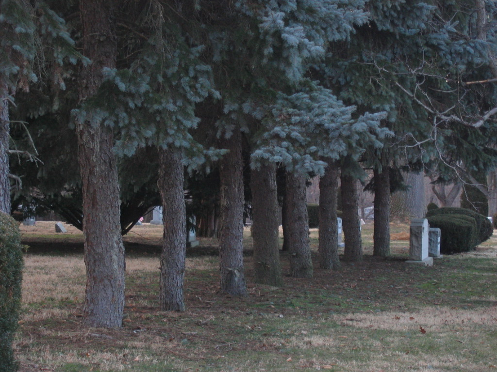 """""""The Line of Trees"""" (Arlington Cemetery, Drexel Hill, PA)"""